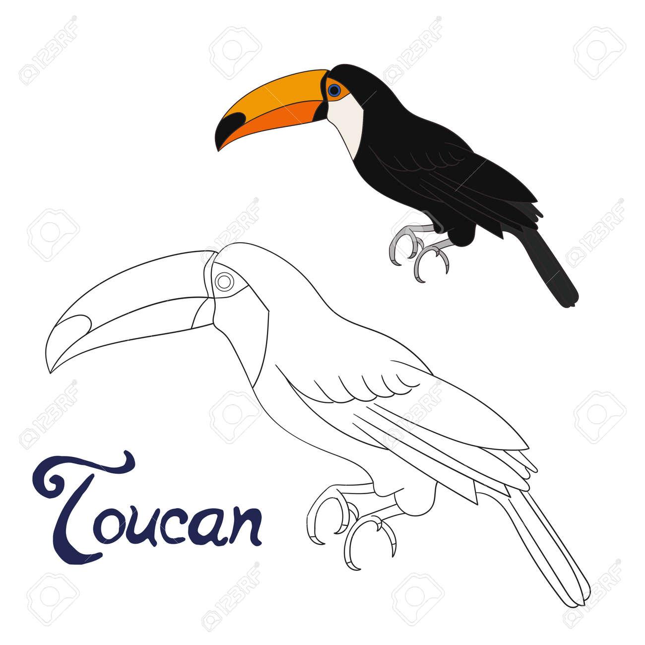 Educación Para Colorear Juego Pájaro Tucán Bosquejo De Dibujos Animados A Mano Ilustración Vectorial Dibujado