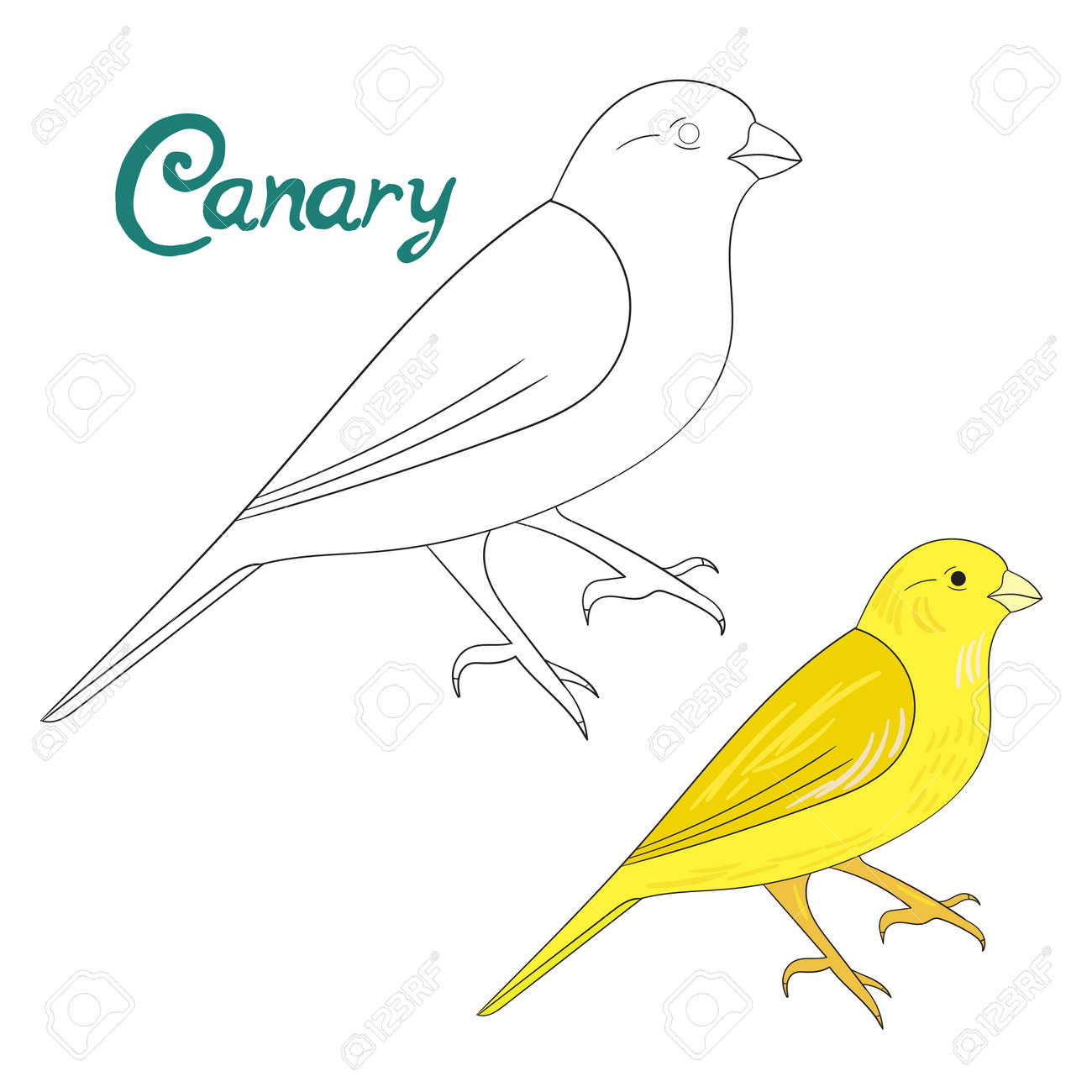 Educational Game Coloring Book Canary Bird Cartoon Doodle Hand Drawn Vector Illustration Stock