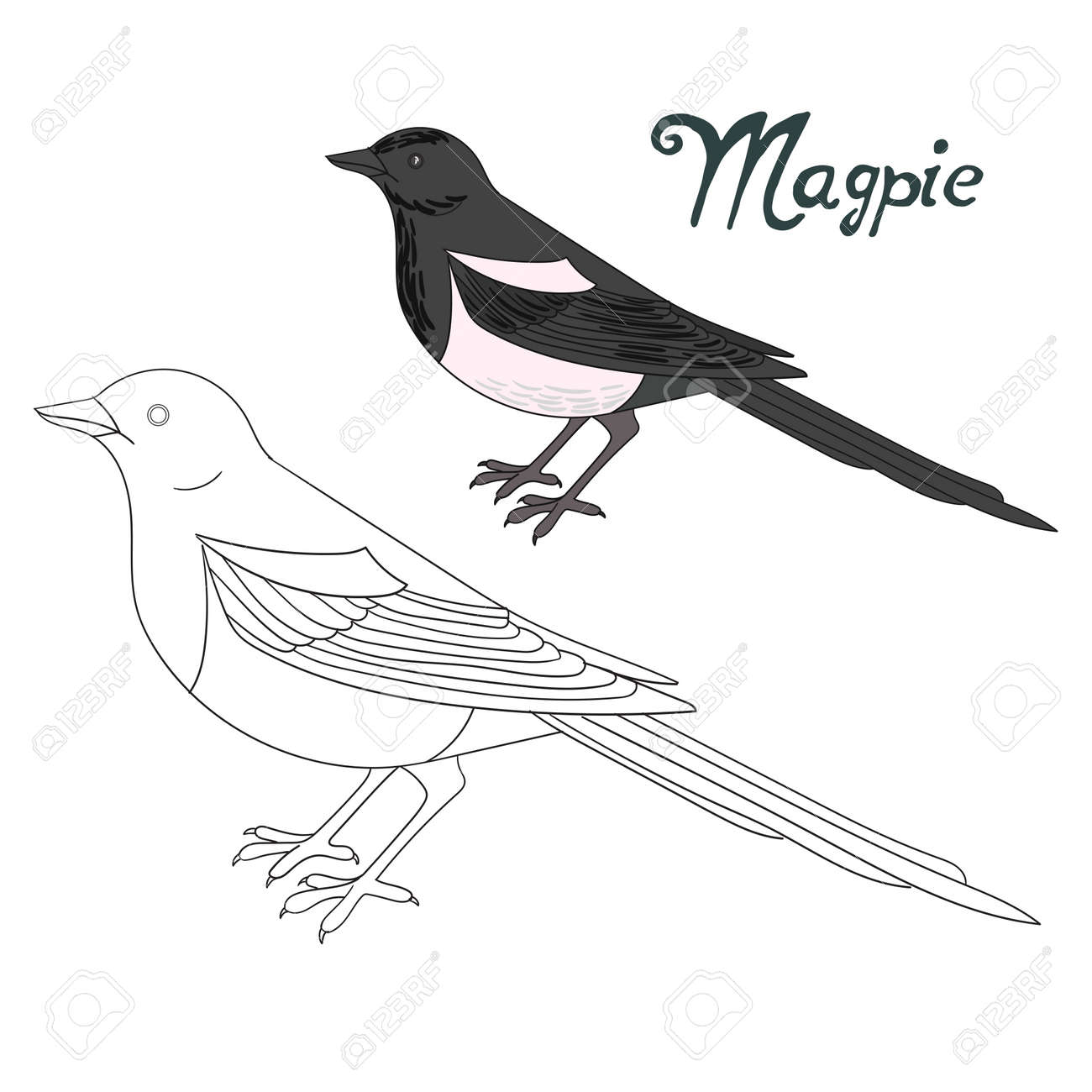 Educational Game Coloring Book Magpie Bird Cartoon Doodle Hand Drawn Vector Illustration Stock