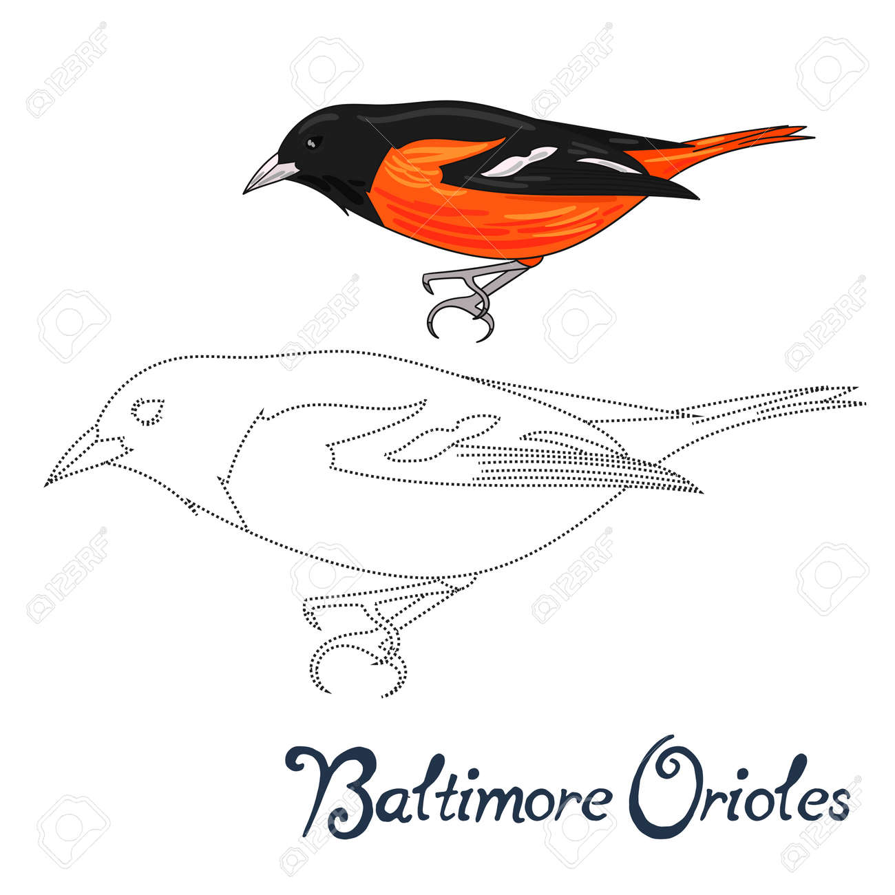 educational game connect the dots to draw baltimore orioles bird