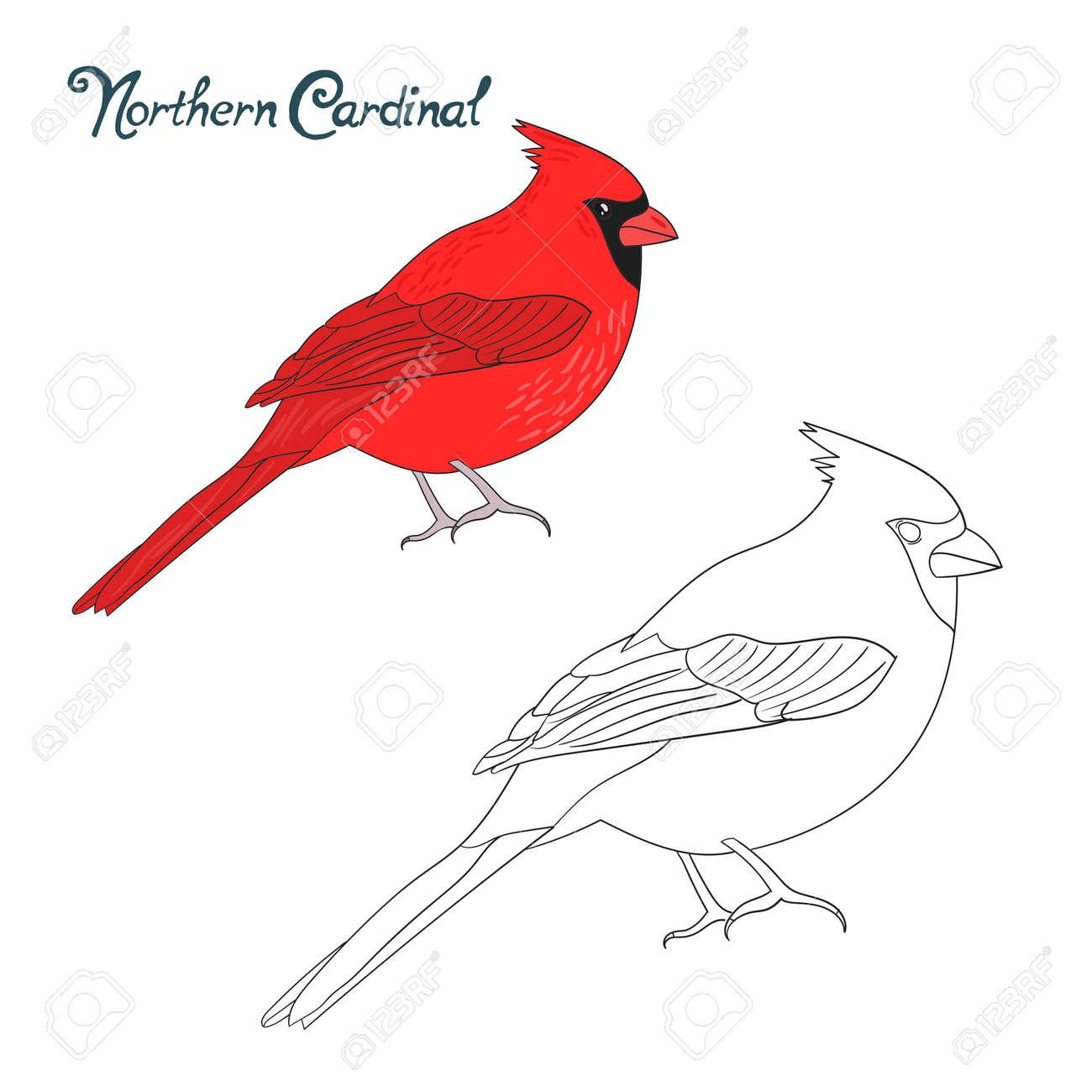 Educational Game Coloring Book Northern Cardinal Bird Cartoon Doodle Hand Drawn Vector Illustration Stock