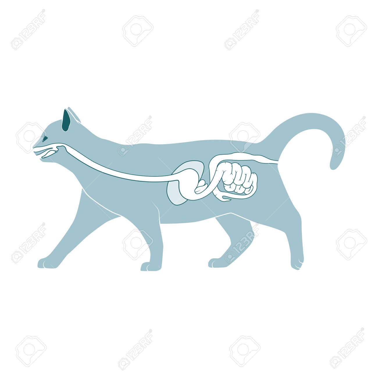Ziemlich Katze Anatomie Verdauungssystem Zeitgenössisch - Anatomie ...