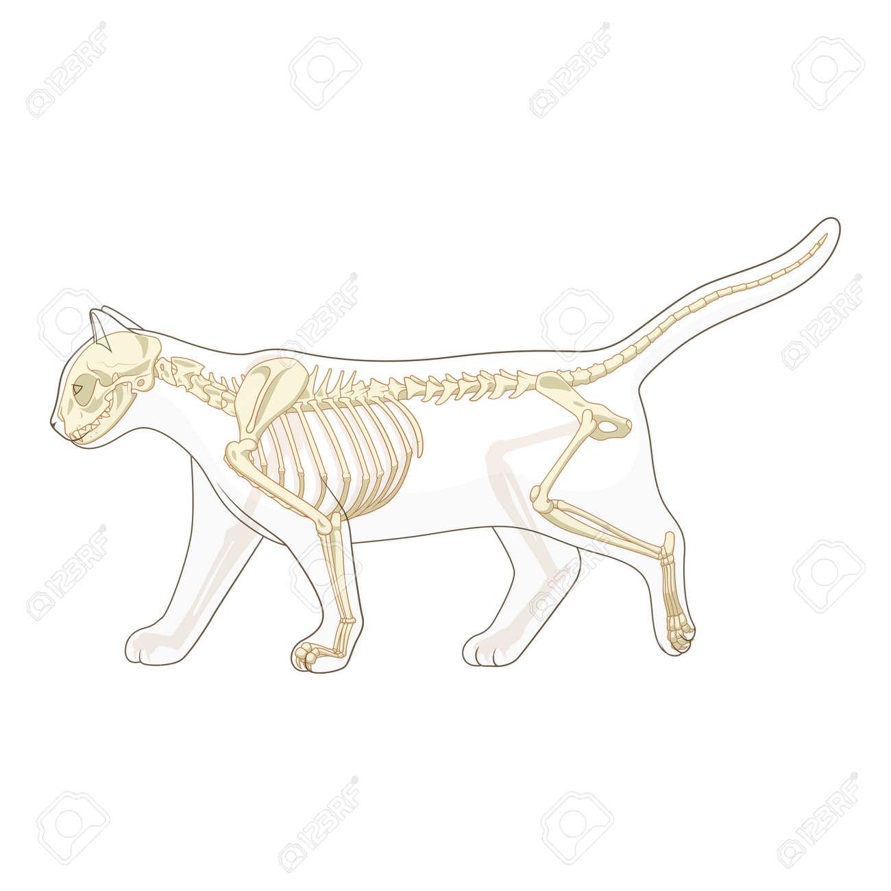 Großartig Katze Anatomie Blase Lage Galerie - Anatomie Ideen ...