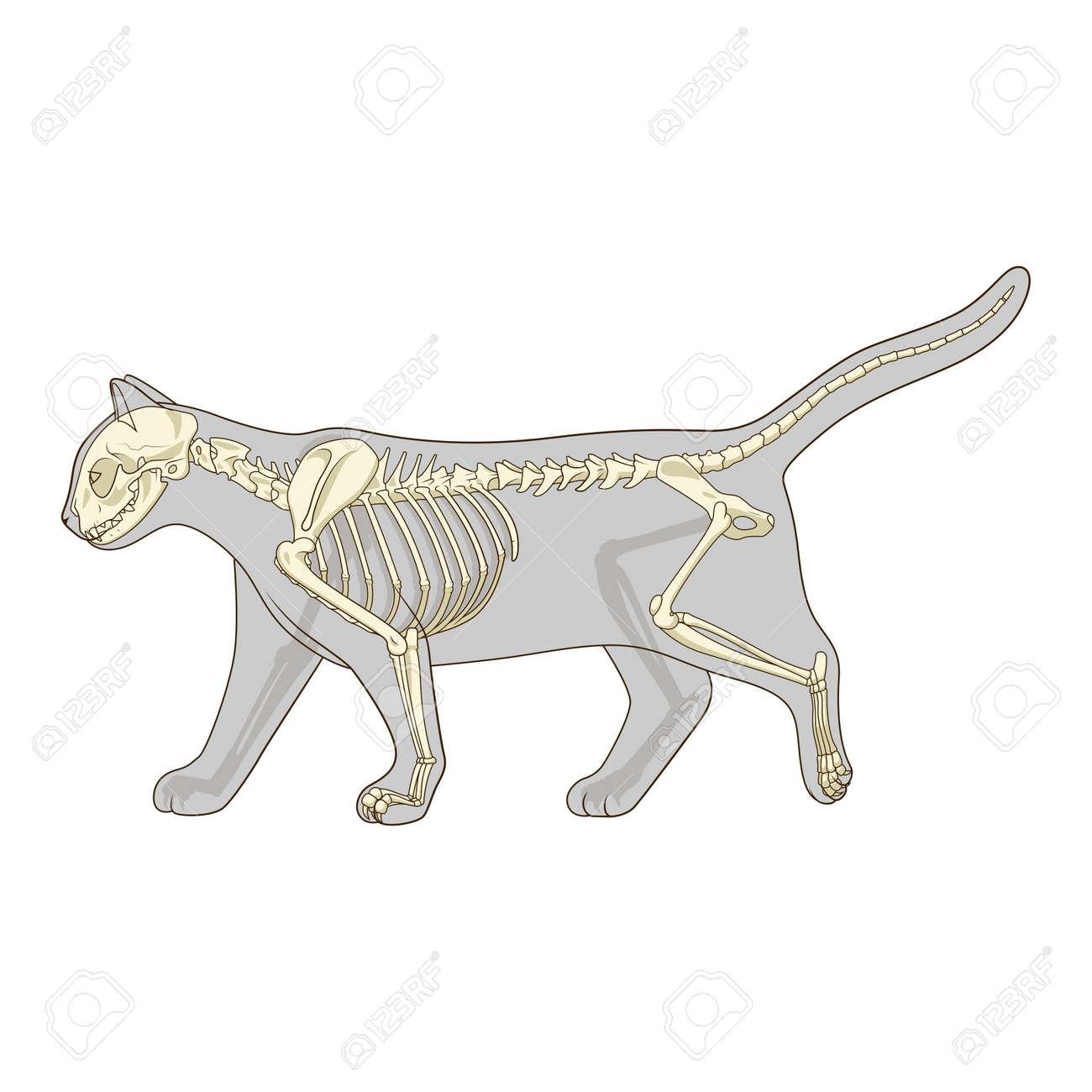 Fein äußere Anatomie Einer Katze Zeitgenössisch - Anatomie Ideen ...