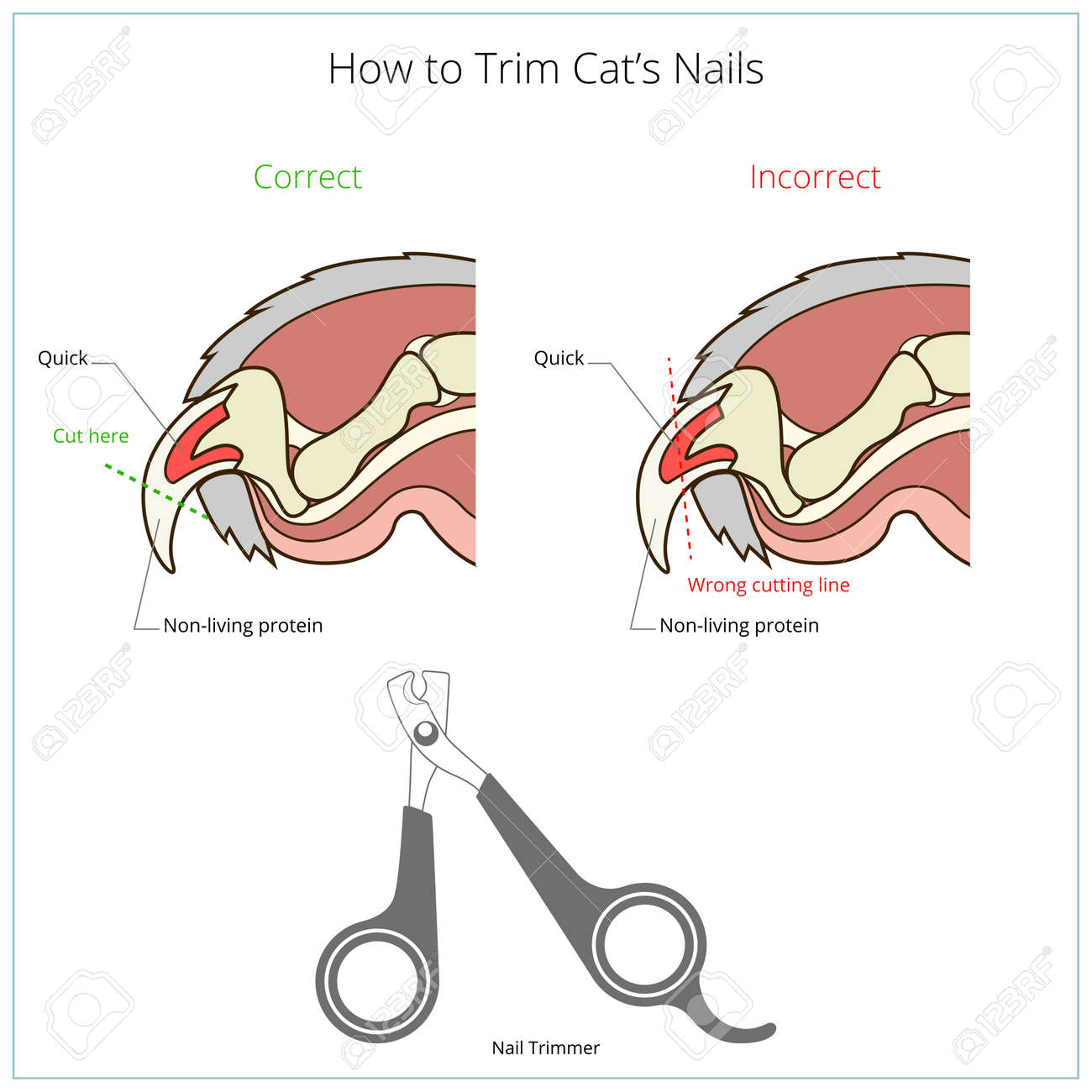 How To Cut Cat Nail Veterinary Medicine Instruction Vector ...