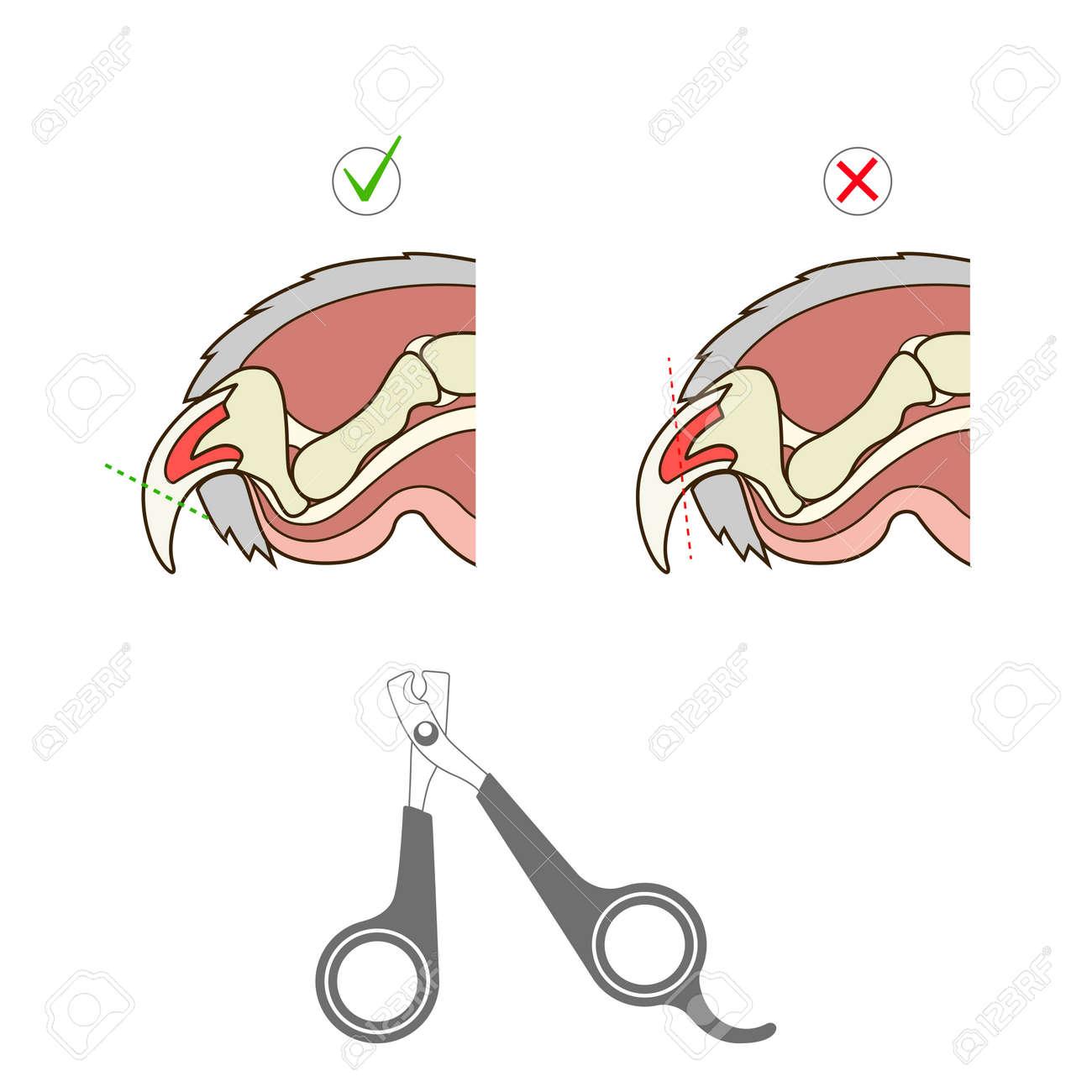 How To Cut Cat Nail Veterinary Medicine Instruction Vector