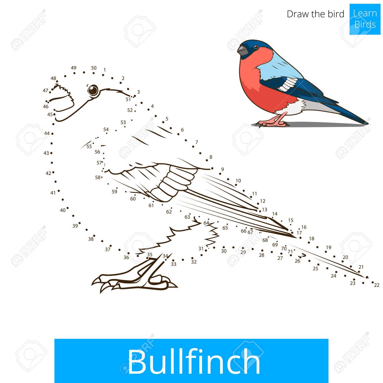 Bullfinch Learn Birds Educational Game To Draw Vector Illustration
