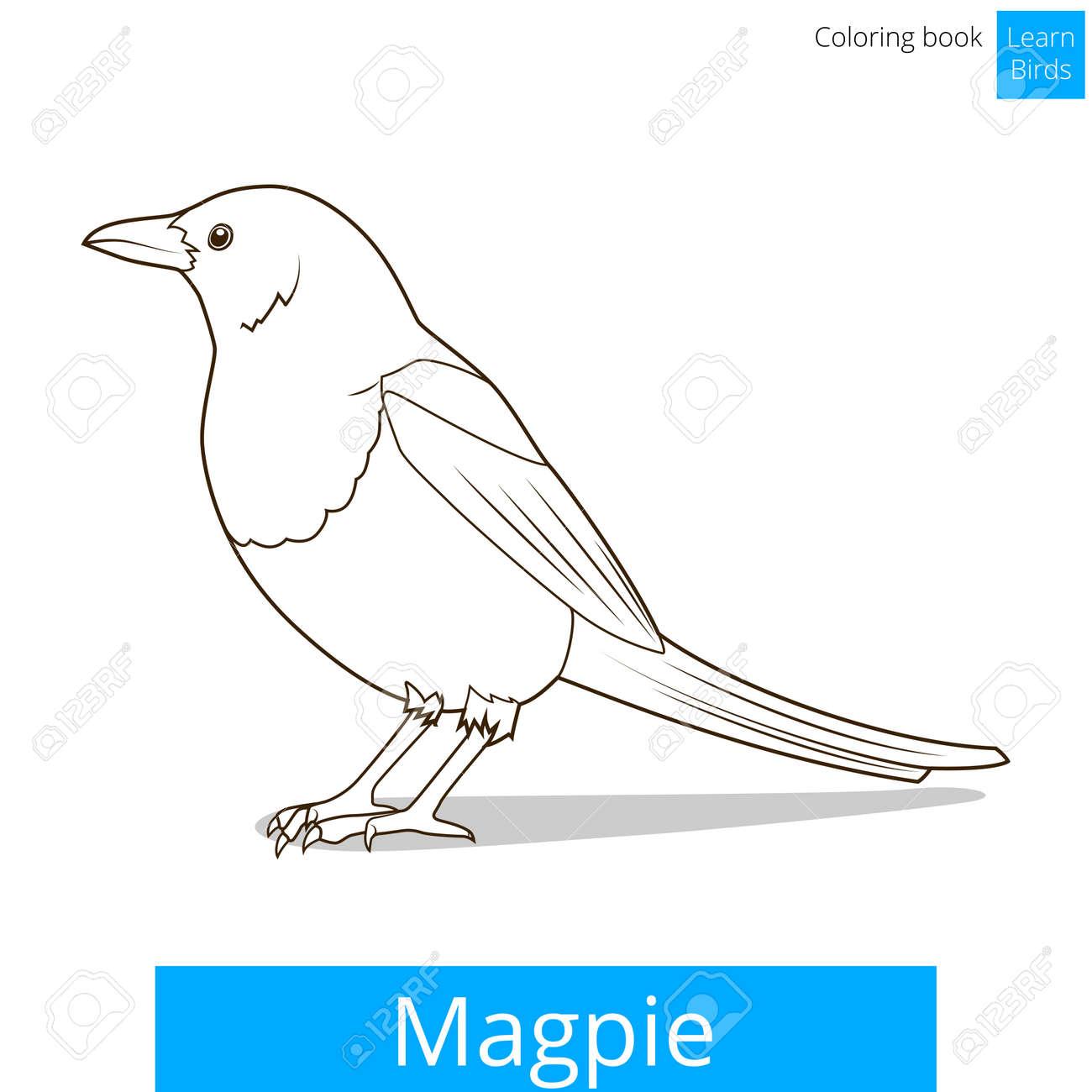 Urraca Aprender Ilustración Educativa Pájaros Vector Del Libro ...