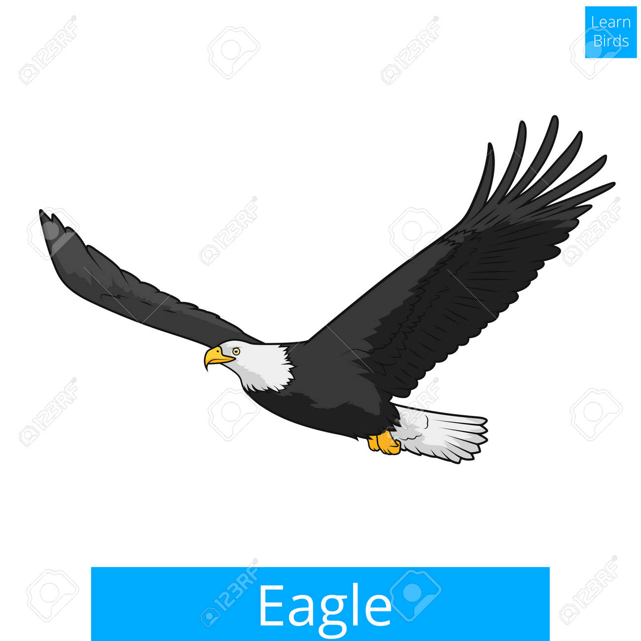 Eagle Learn Birds Educational Game Illustration Royalty Free ...
