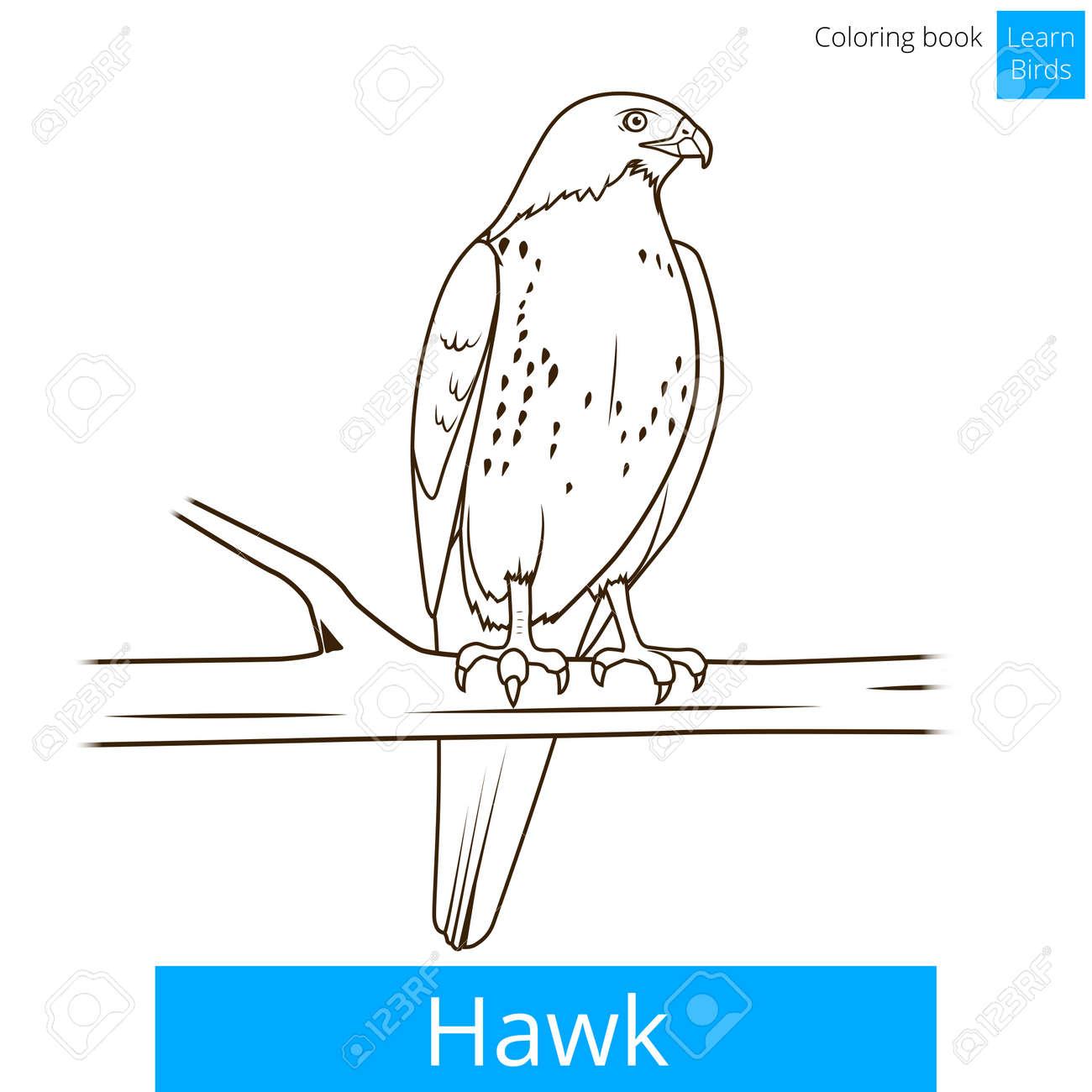 Aves Hawk Aprender Ilustración Educativa Pájaros Vector Del Libro ...