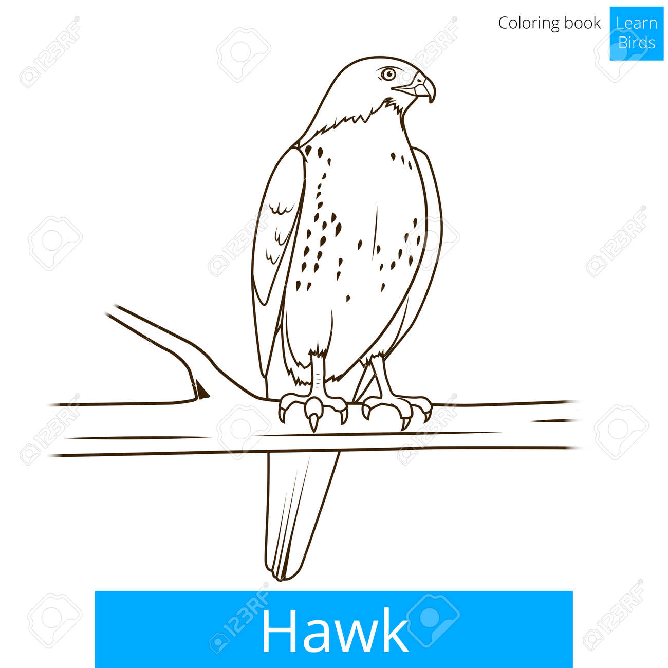 Hawk Bird Learn Birds Educational Game Coloring Book Vector Illustration Stock