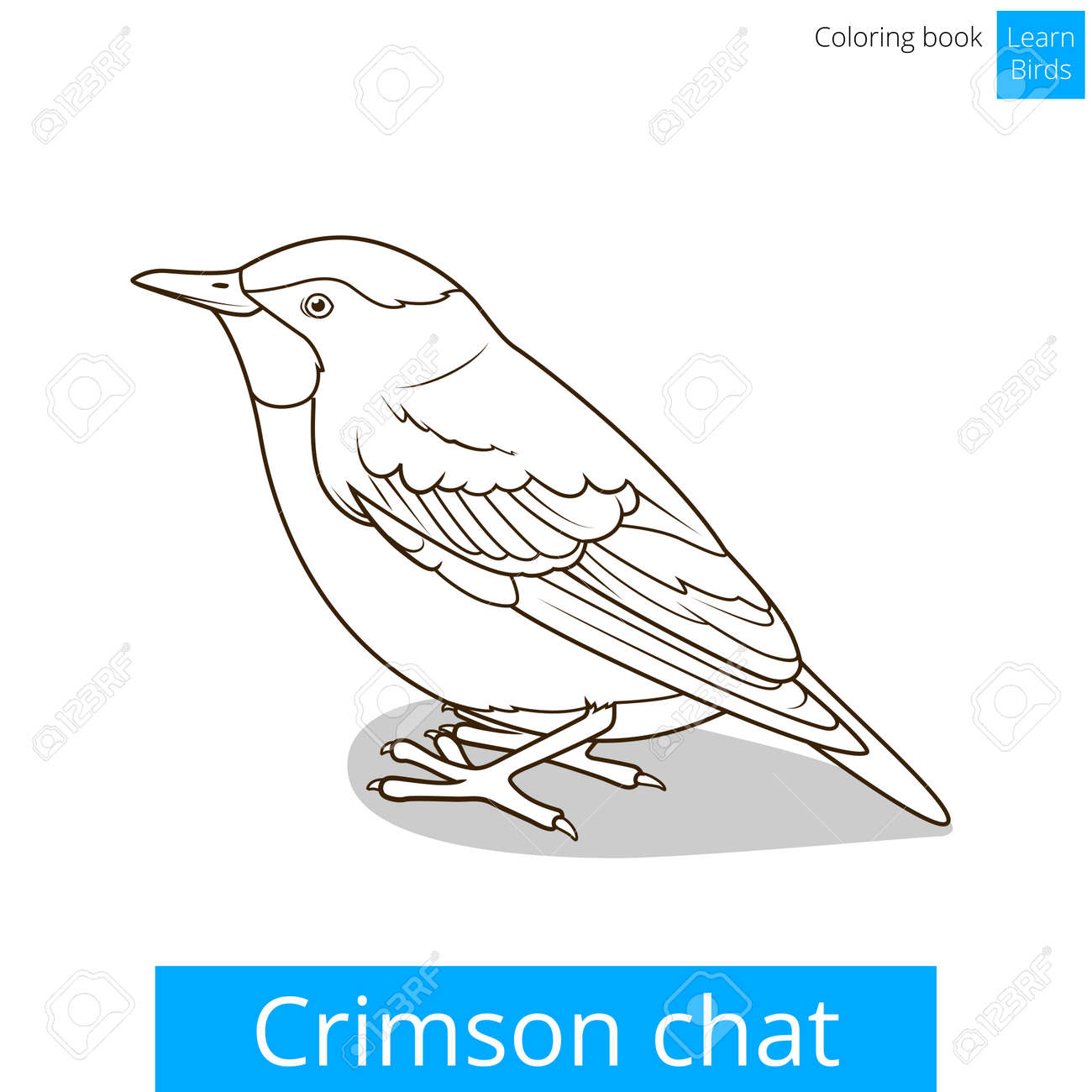 Crimson Chat Bird Learn Birds Educational Game Coloring Book Vector Illustration Stock