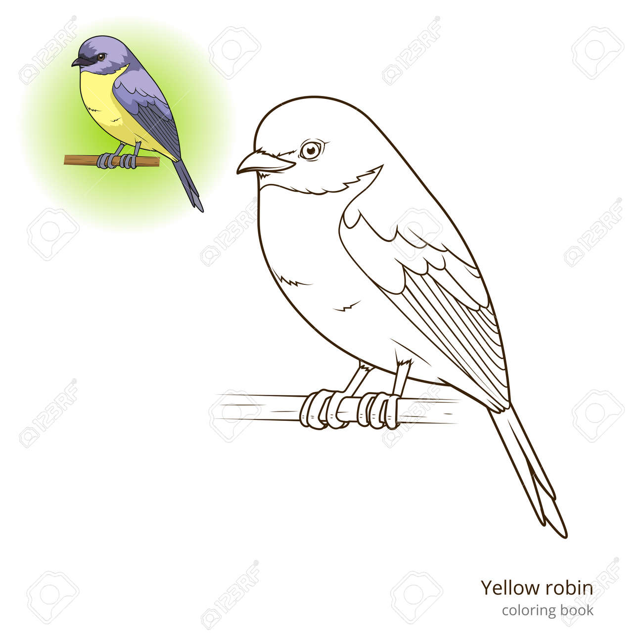 Yellow Robin Bird Learn Birds Educational Game Coloring Book