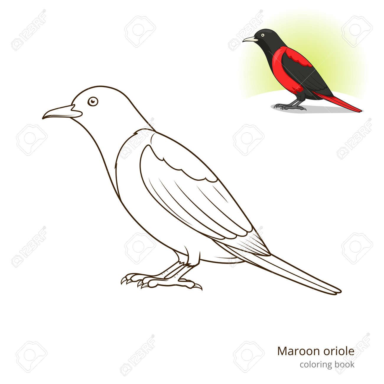 Marrón Pájaro Ole Aprender Ilustración Educativa Pájaros Vector Del ...