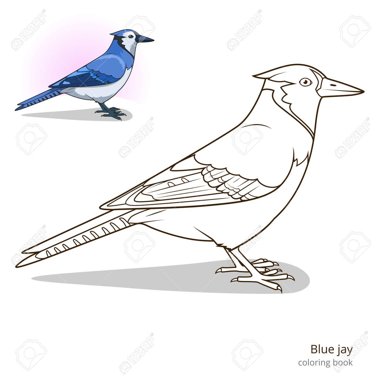 Jay Azul Pájaro Aprender Pájaros Educativo Para Colorear Juego De ...