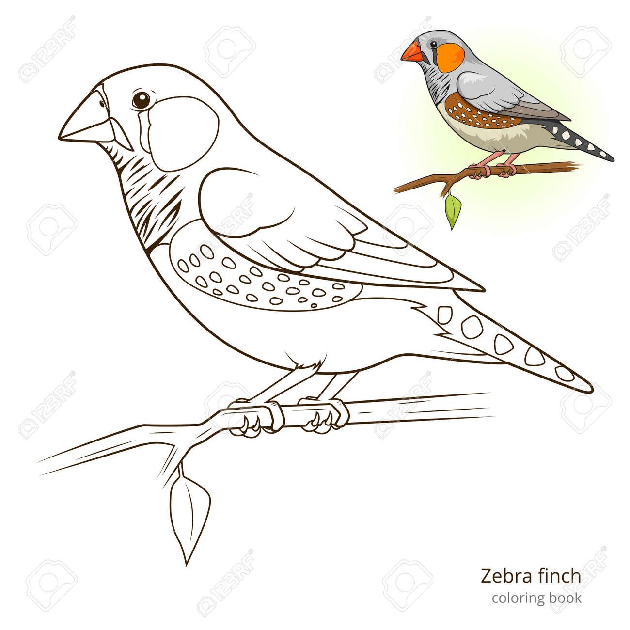 Increíble Pájaro Para Colorear Viñeta - Dibujos Para Colorear En ...