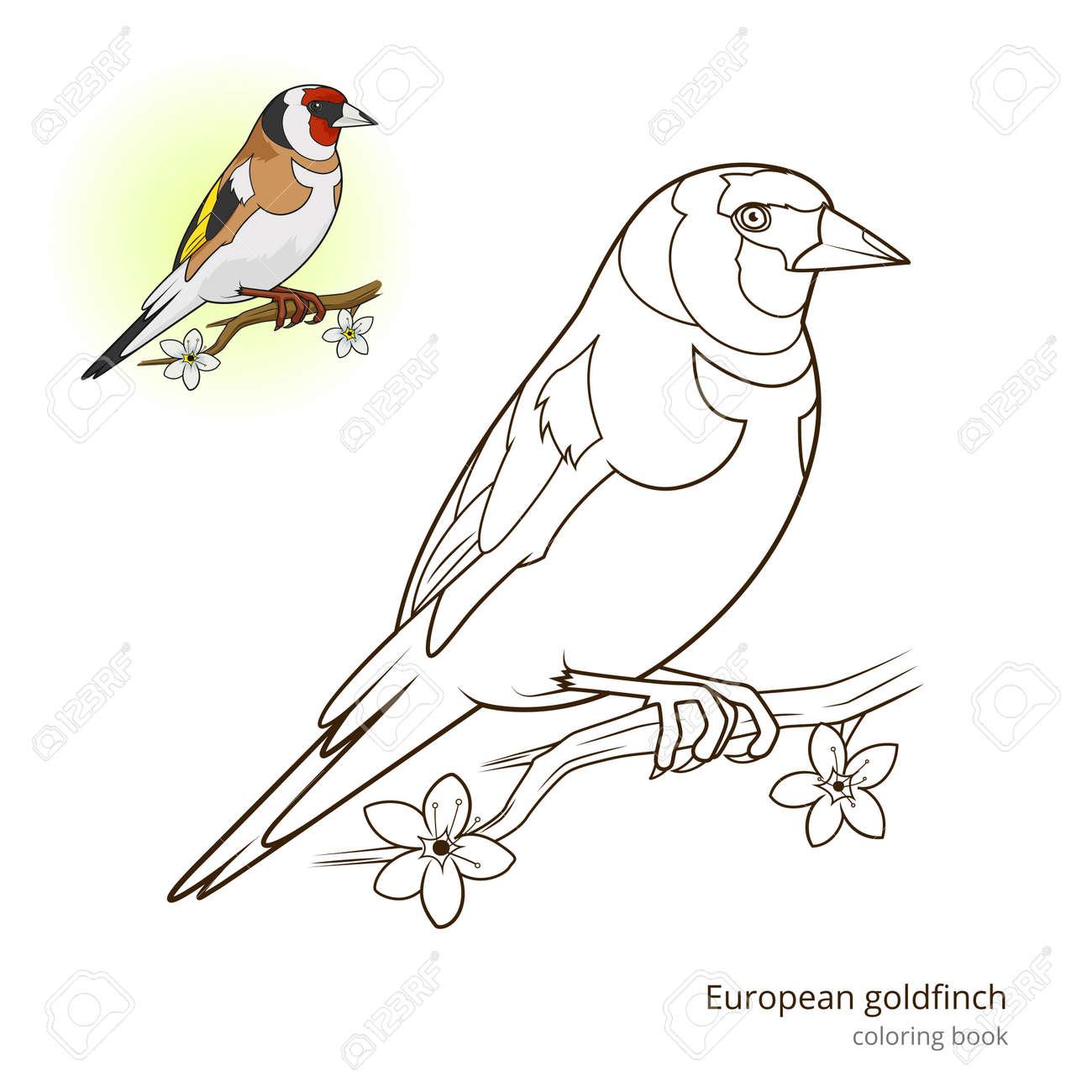 Jilguero De Aves Aprender Ilustración Educativa Pájaros Vector Del ...