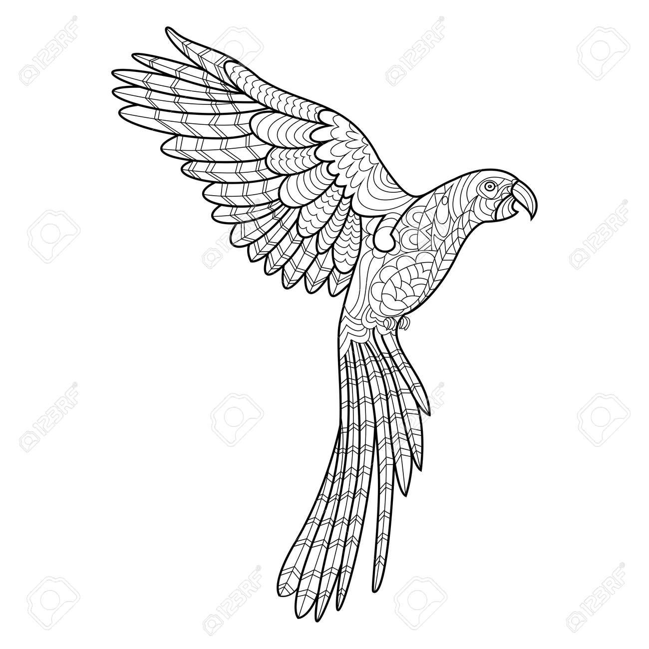 Loro Guacamayo De Libro Para Colorear De Aves Para La Ilustración ...