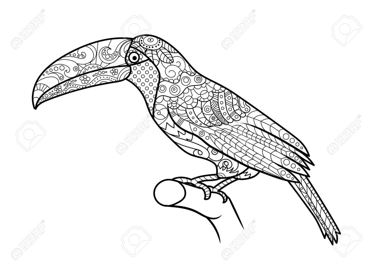 Tucán Libro Para Colorear De Aves Para La Ilustración Vectorial ...
