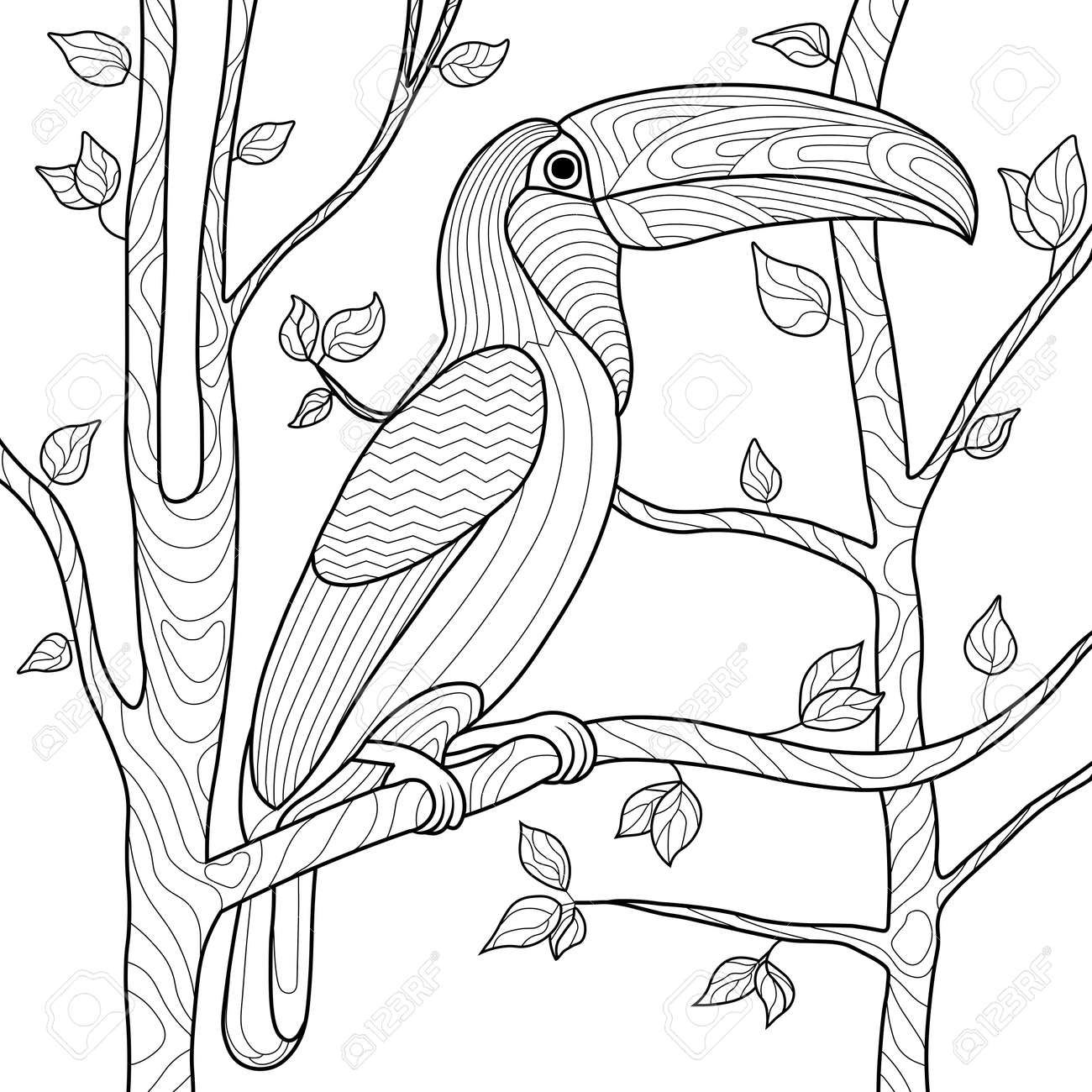 - Toucan Bird Coloring Book For Adults Vector Illustration. Anti