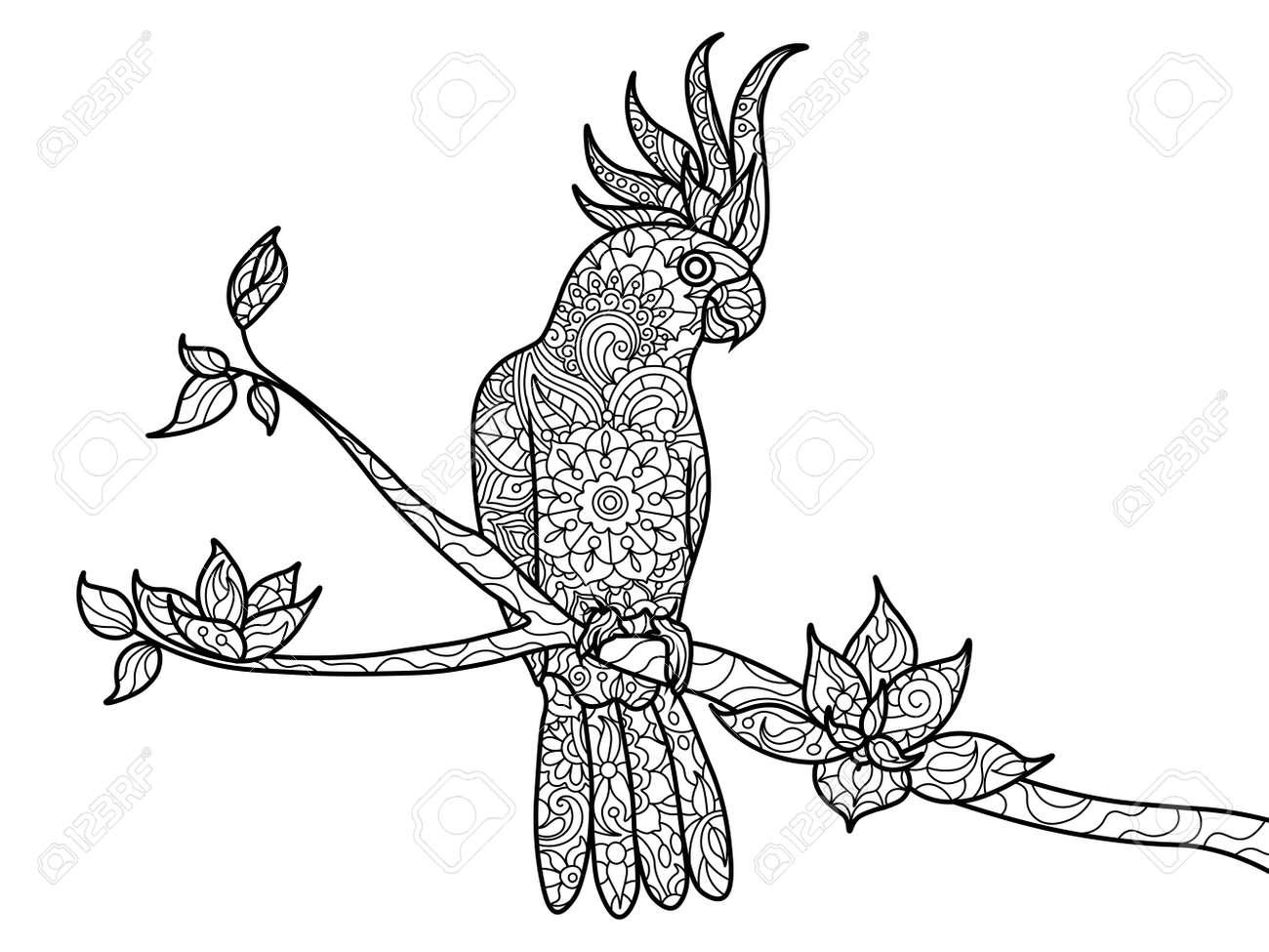Cockatoo Loro Libro Para Colorear De Aves Para La Ilustración ...