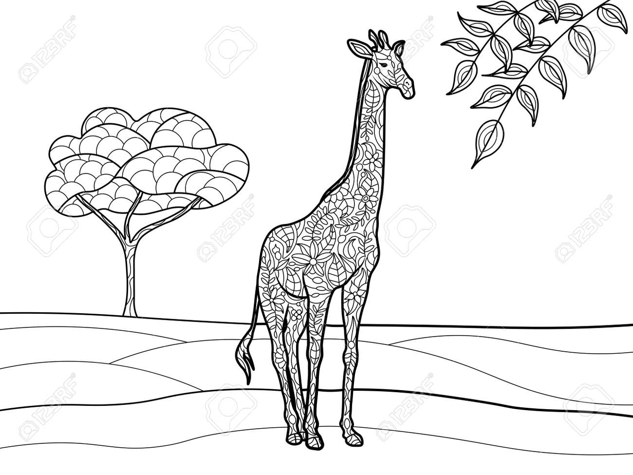 Giraffe Coloring Book For Adults Vector Illustration. Black And ...