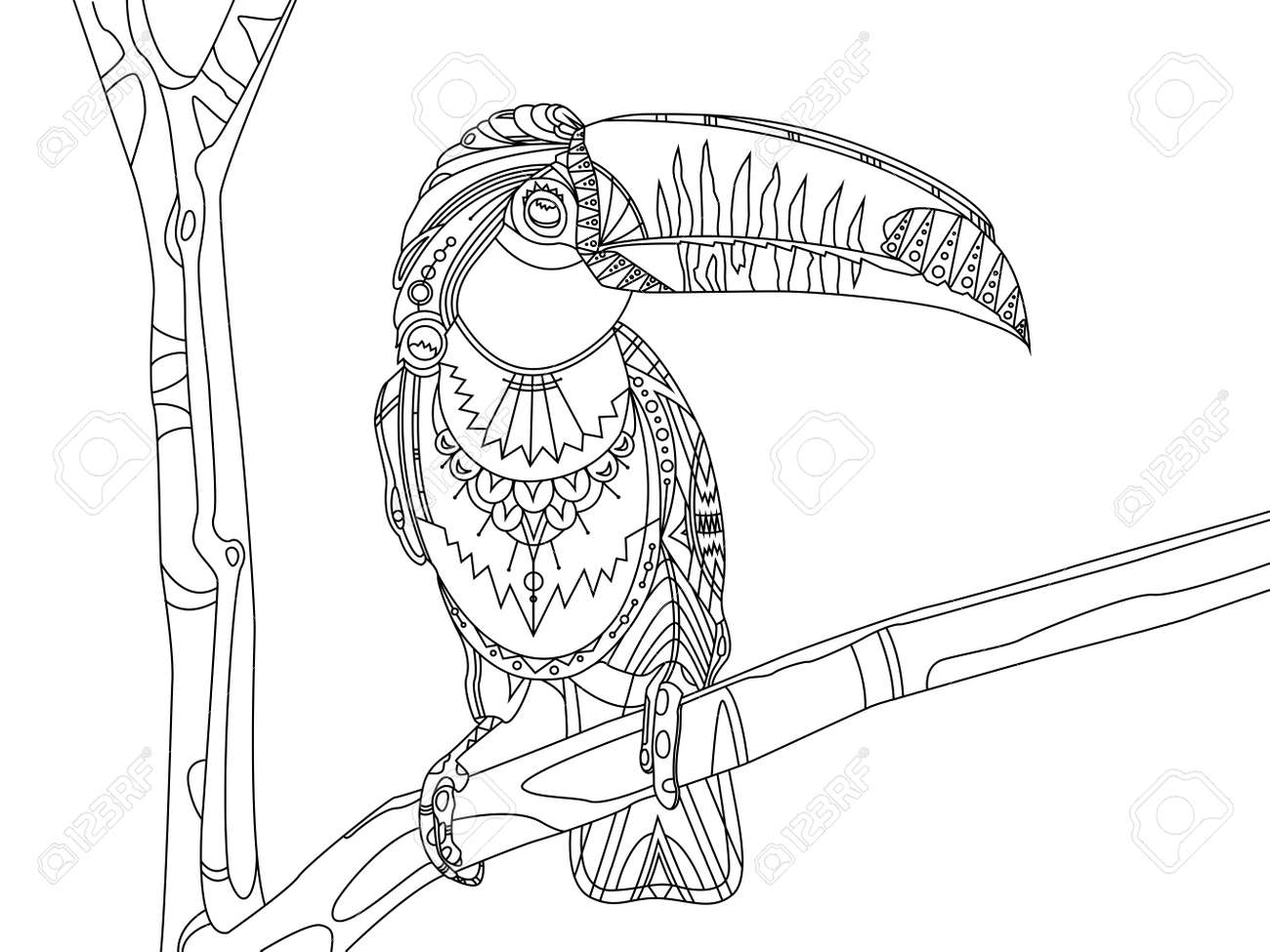 Toucan bird coloring book vector illustration. Black and white..