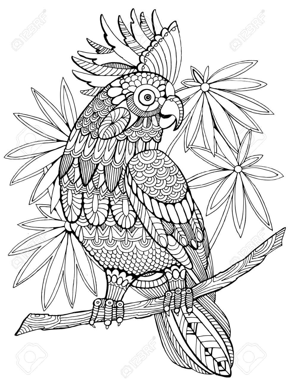 Cockatoo perroquet livre de coloriage pour les adultes illustration Anti stress coloration pour les