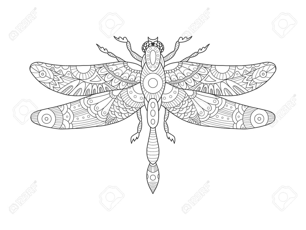 Dragonfly Coloring Book For Adults Vector Illustration Anti Stress
