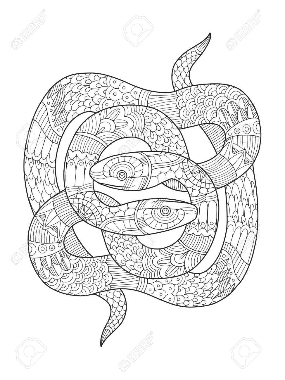 Snake Coloring Book For Adults Vector Illustration. Anti-stress ...