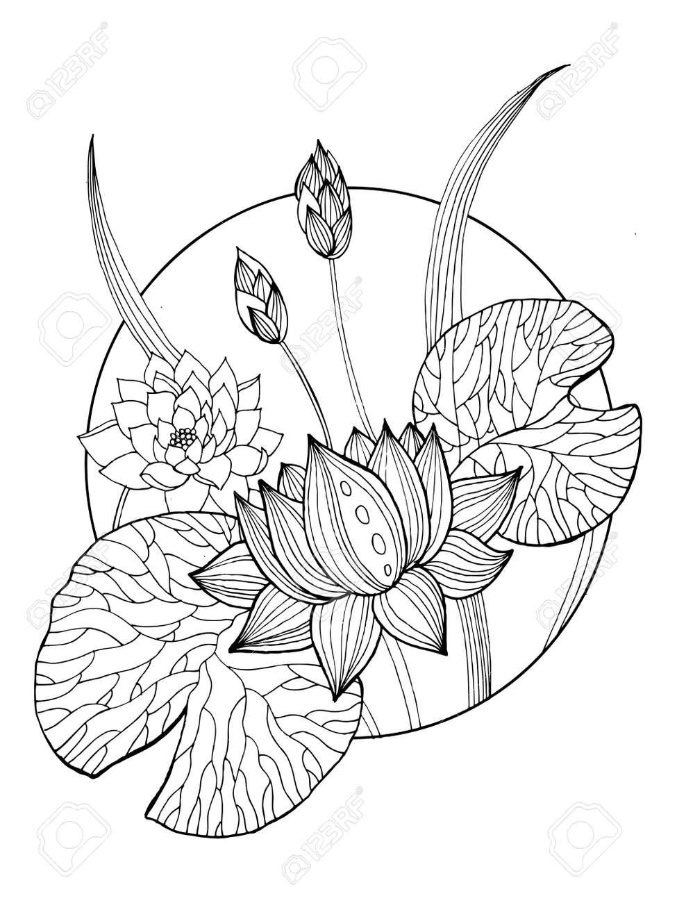 Lotus Flower Coloring Book Vector Illustration Tattoo Stencil