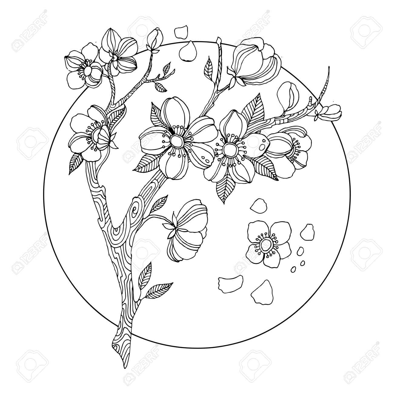 桜塗り絵ベクトル イラスト の写真素材画像素材 Image 71759668