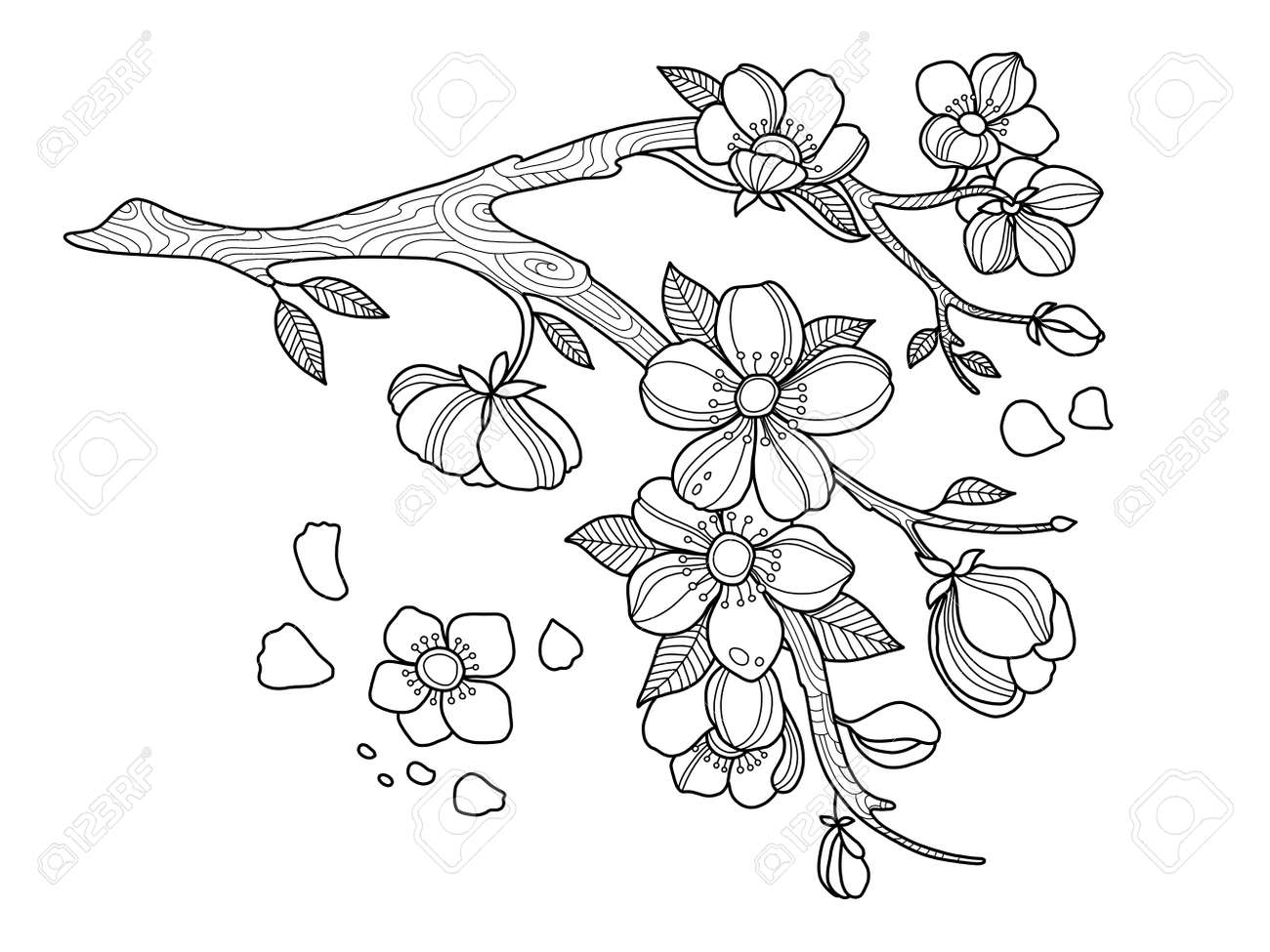 Kirschblüten Malbuch Vektor-Illustration Lizenzfreie Fotos, Bilder ...