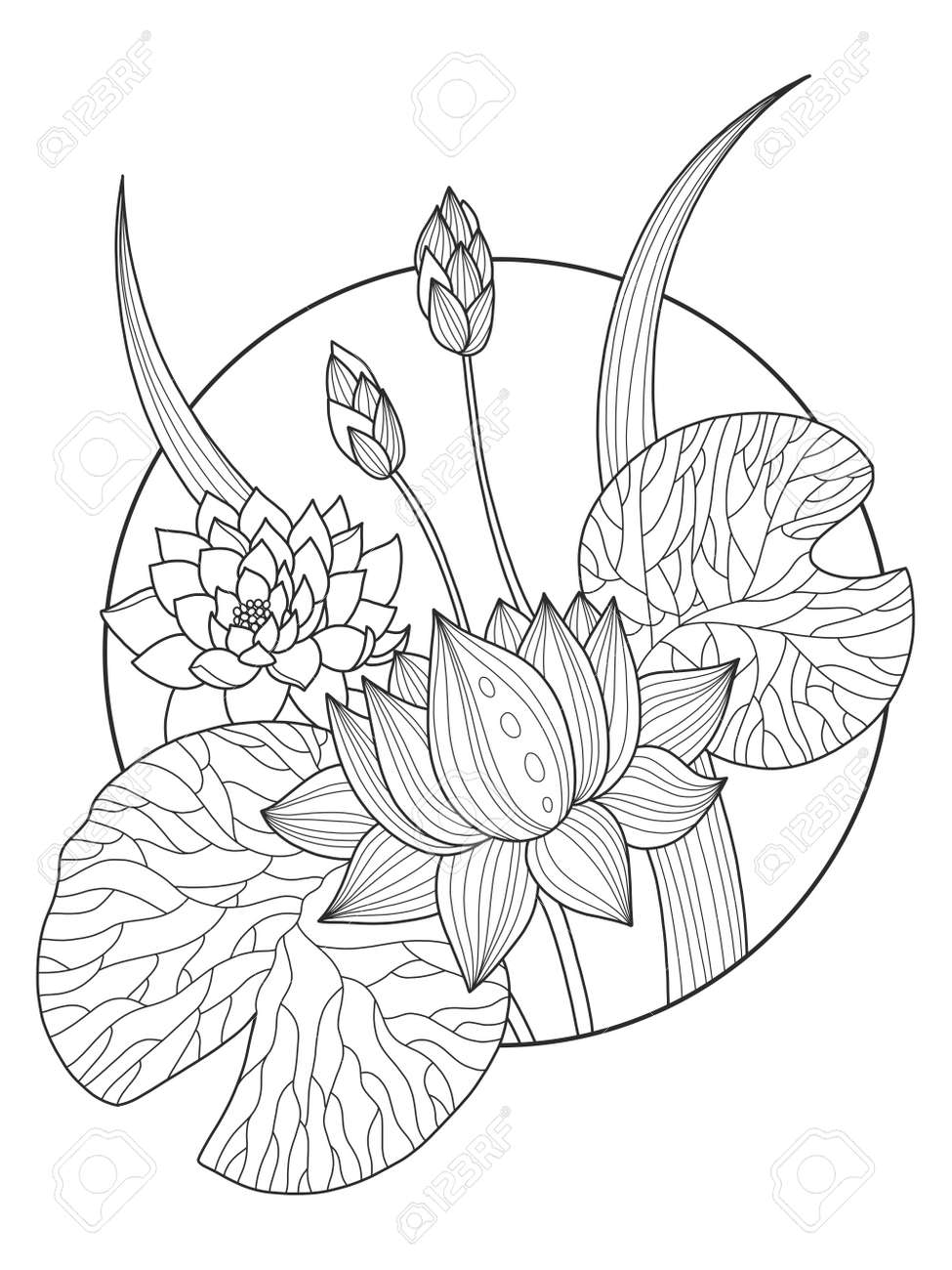 Lotus Flower Coloring Book Vector Illustration Royalty Free Cliparts