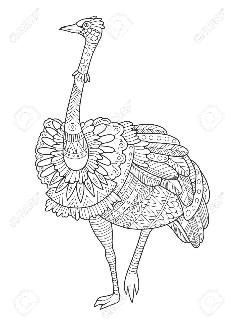 Ostrich Bird Coloring Book Vector Illustration Black And White - Bird-coloring-book