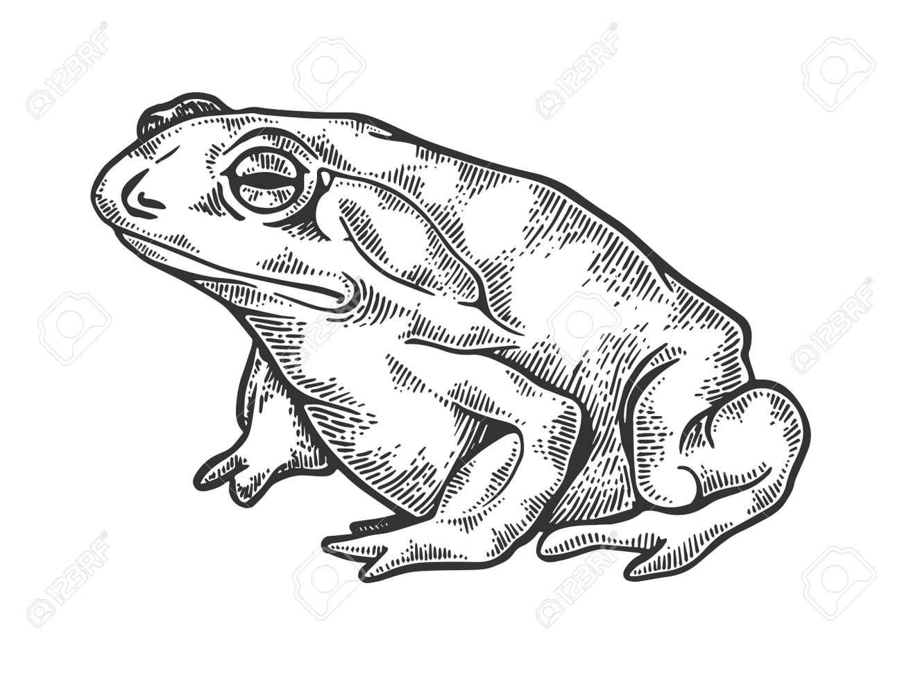 Hallucinogenic toad engraving vector illustration - 102399446