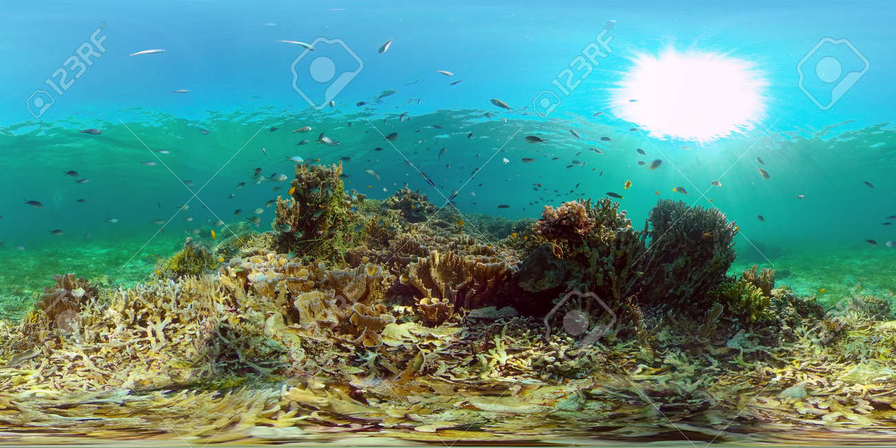 Tropical colourful underwater seascape.The underwater world with colored fish and a coral reef. Philippines. 360 panorama VR - 168137988