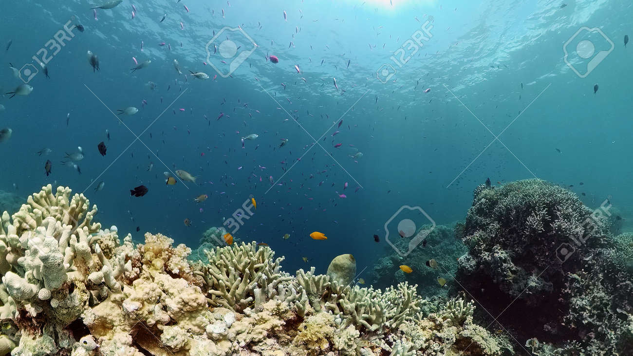 Coral reef underwater with fishes and marine life. Coral reef and tropical fish. - 168137994