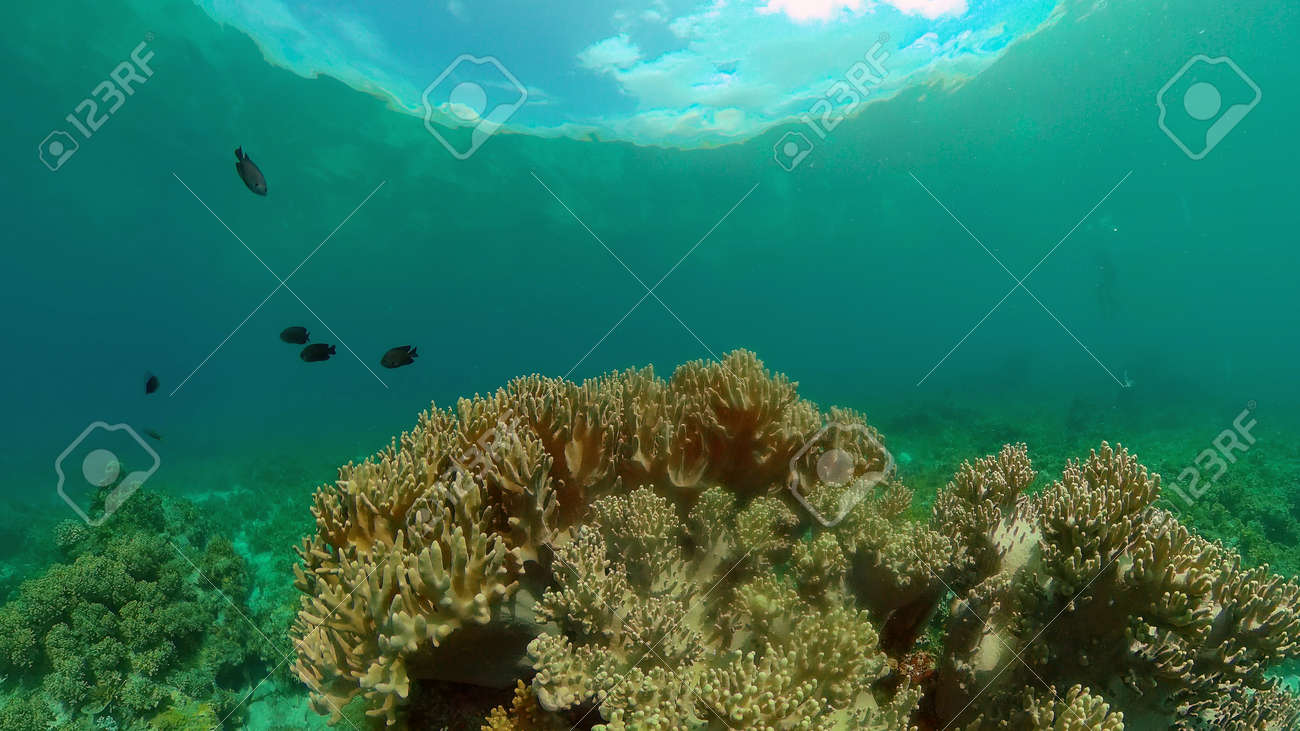 Colourful tropical coral reef. Hard and soft corals, underwater landscape. Philippines. - 168137997
