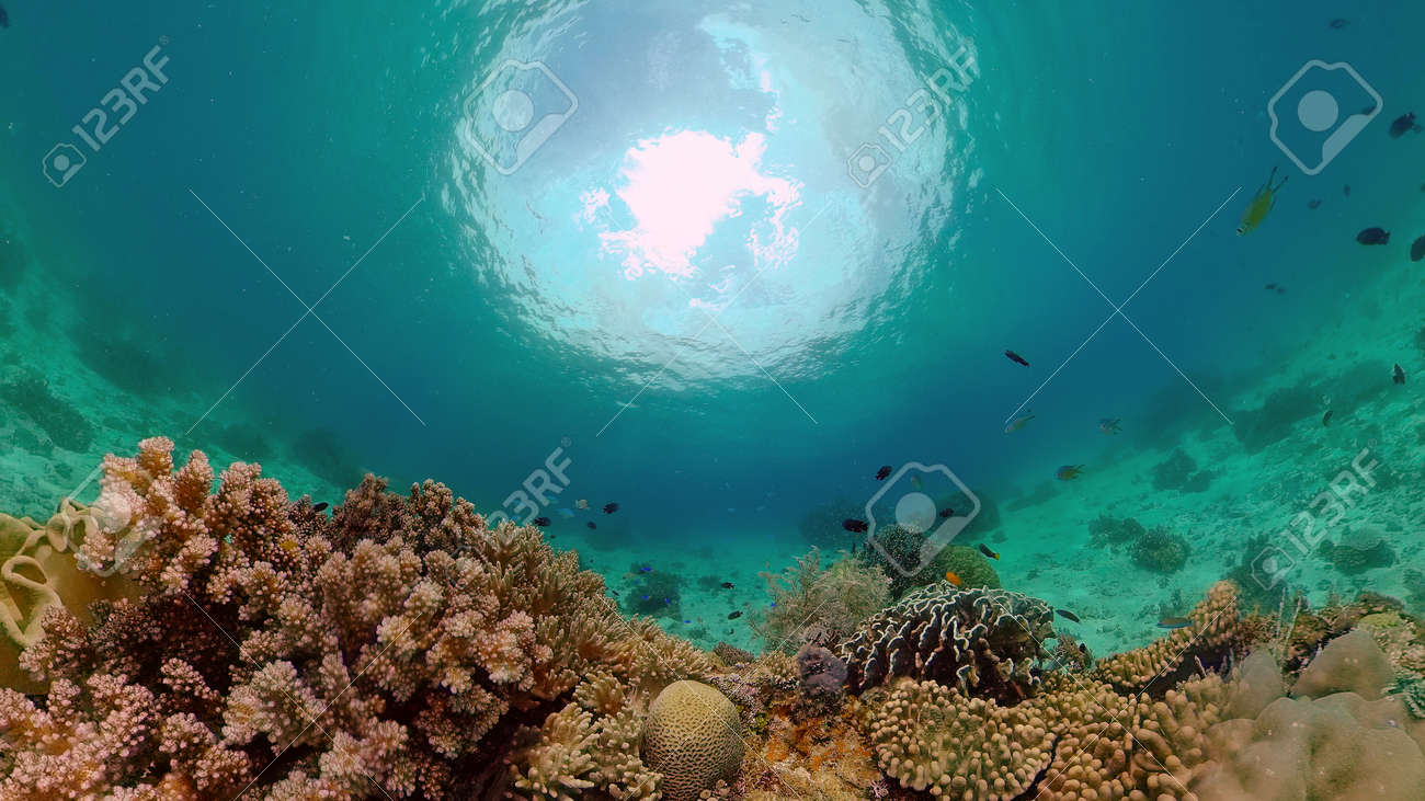 Colourful tropical coral reef. Tropical coral reef. Underwater fishes and corals. Philippines. - 168138010