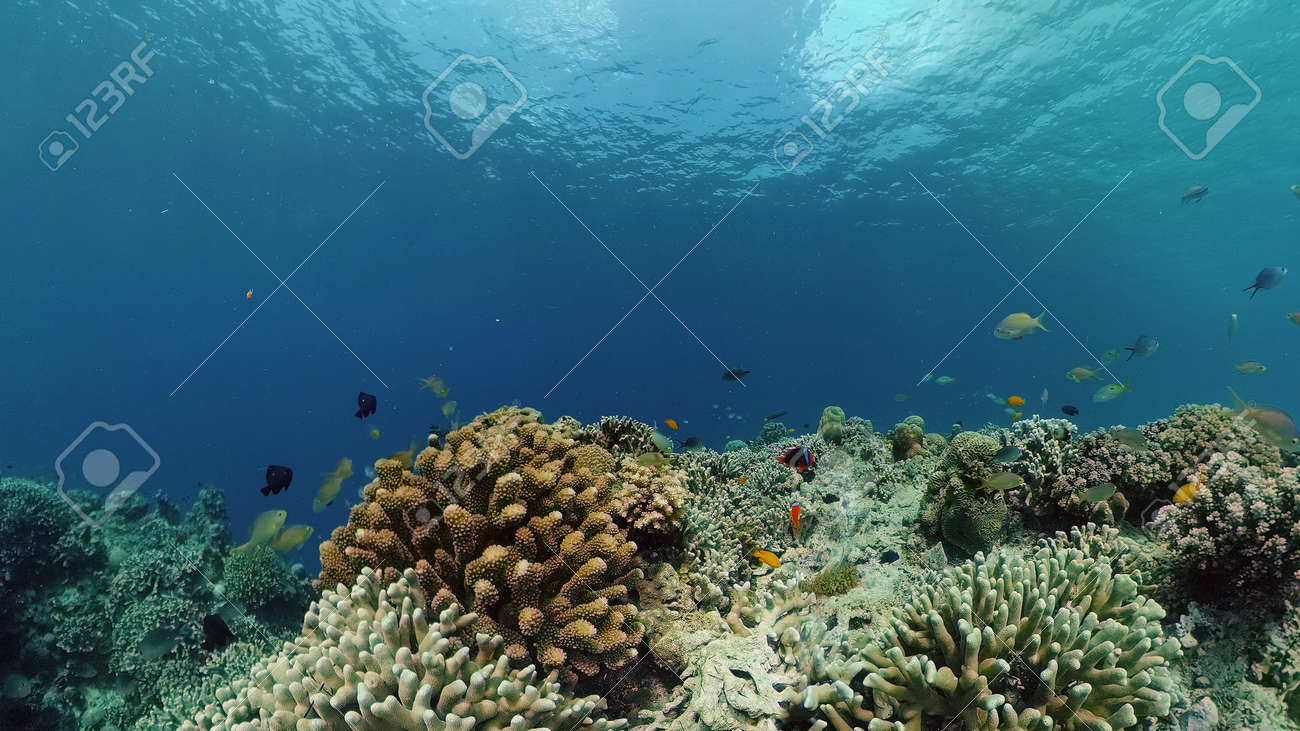 Coral reef underwater with fishes and marine life. Coral reef and tropical fish. Philippines. - 168138017