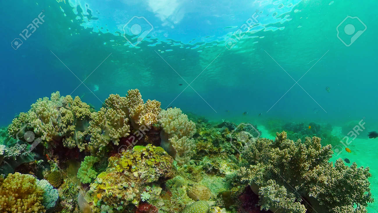 Tropical colourful underwater seascape.The underwater world with colored fish and a coral reef. Philippines. - 168138033