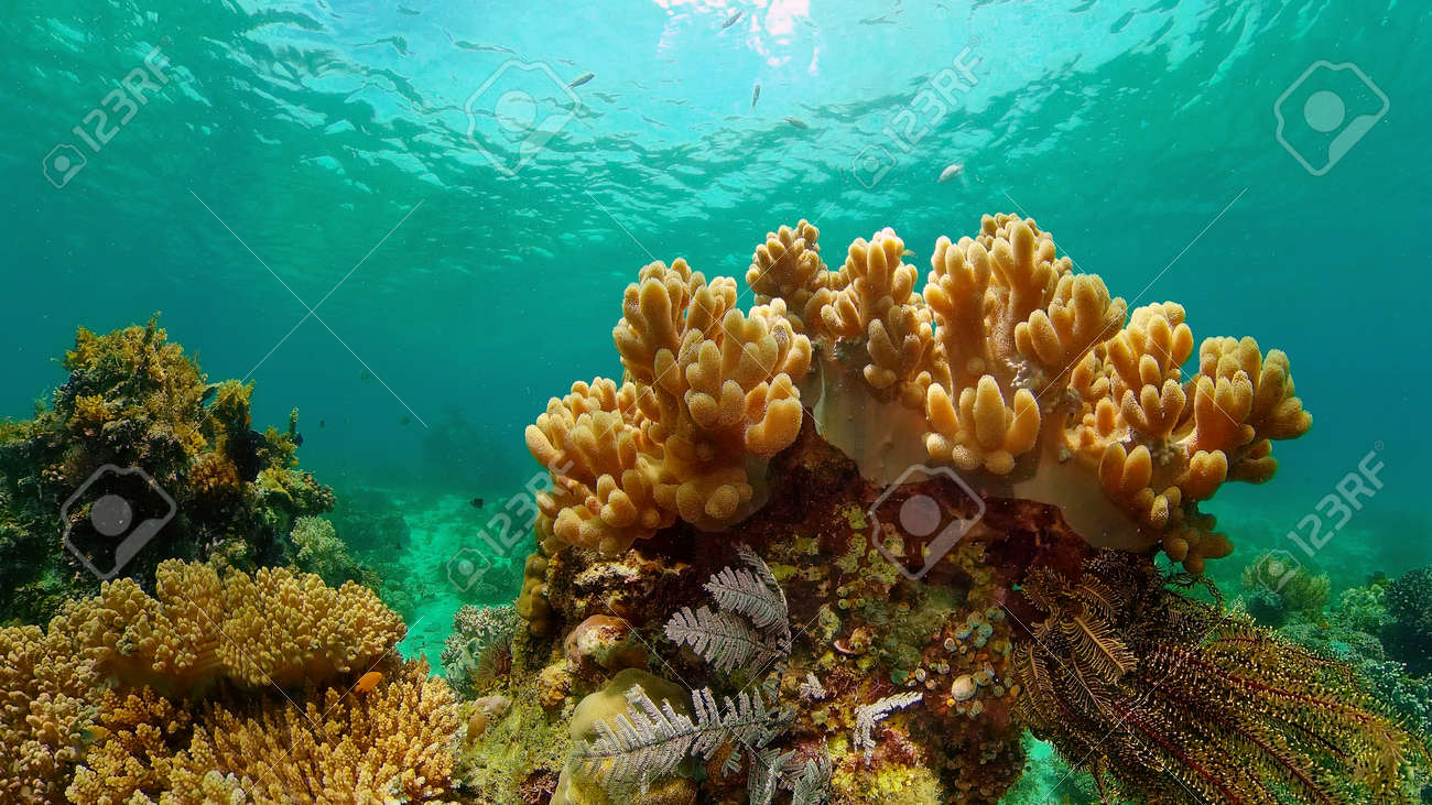 Coral reef underwater with tropical fish. Hard and soft corals, underwater landscape. Travel vacation concept. Philippines. - 168138034