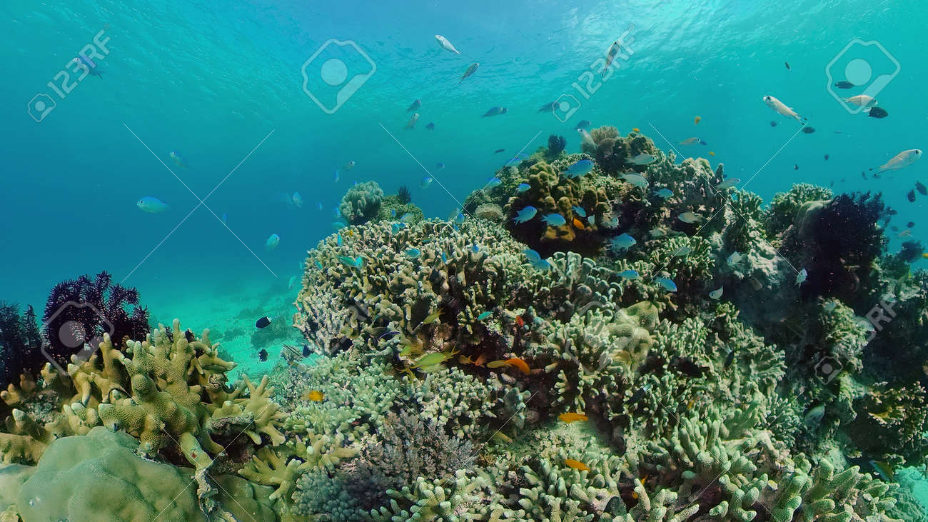 The Underwater World of the with Colored Fish and a Coral Reef. Tropical reef marine. Philippines. - 168138036