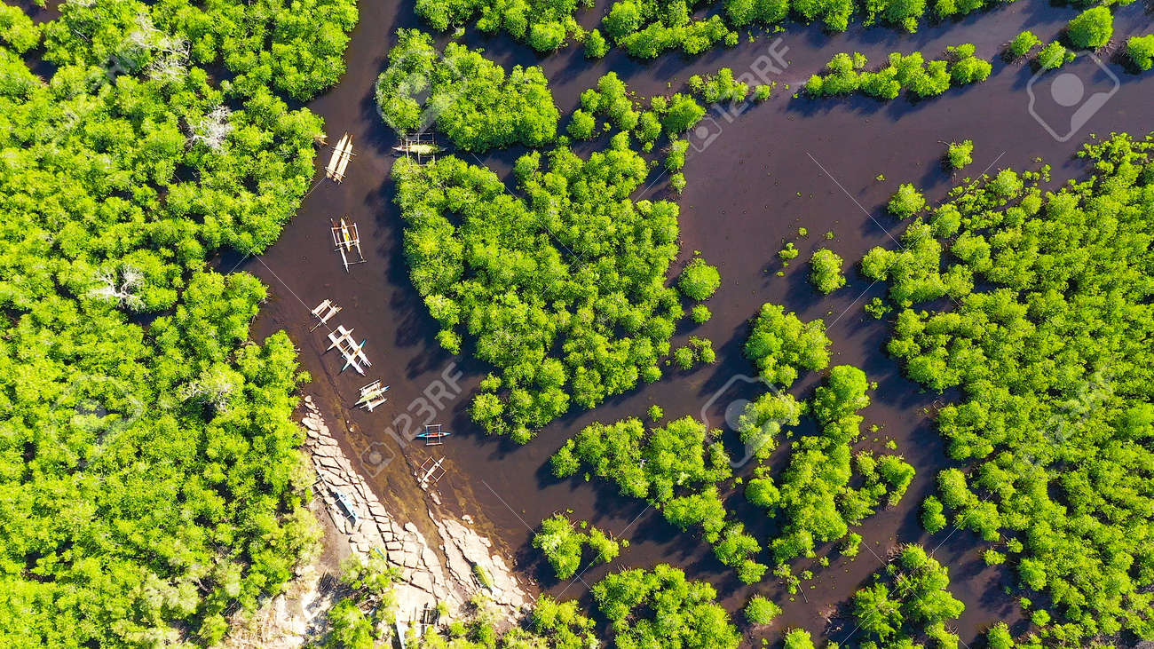 Mangroves in a swampy area on a tropical island. Mangrove landscape, Mindanao, Philippines. - 169413708