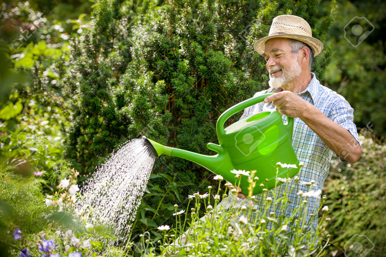 Senior Man Watering The Flowers In The Garden Stock Photo   14298455