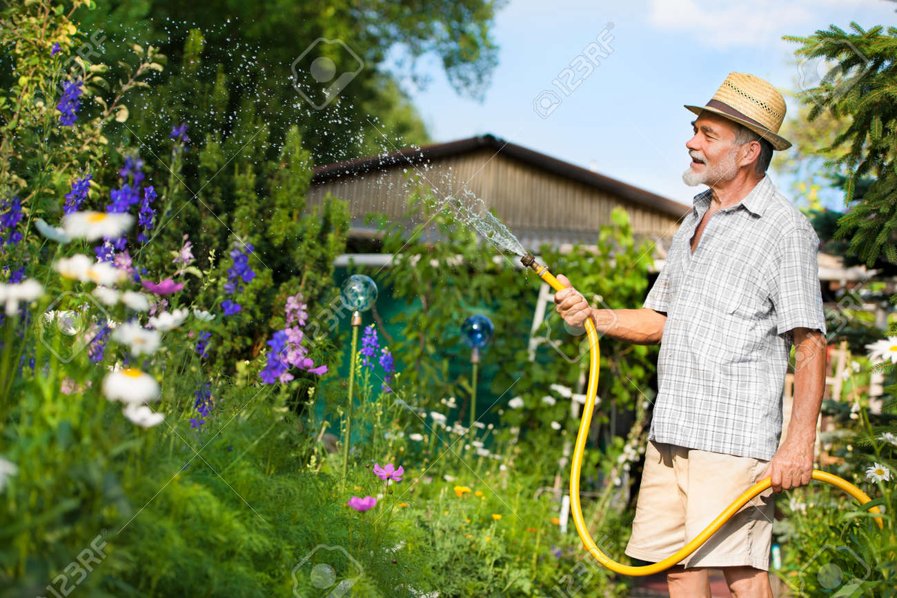 Senior Man Watering The Garden With Hose Stock Photo   14298451
