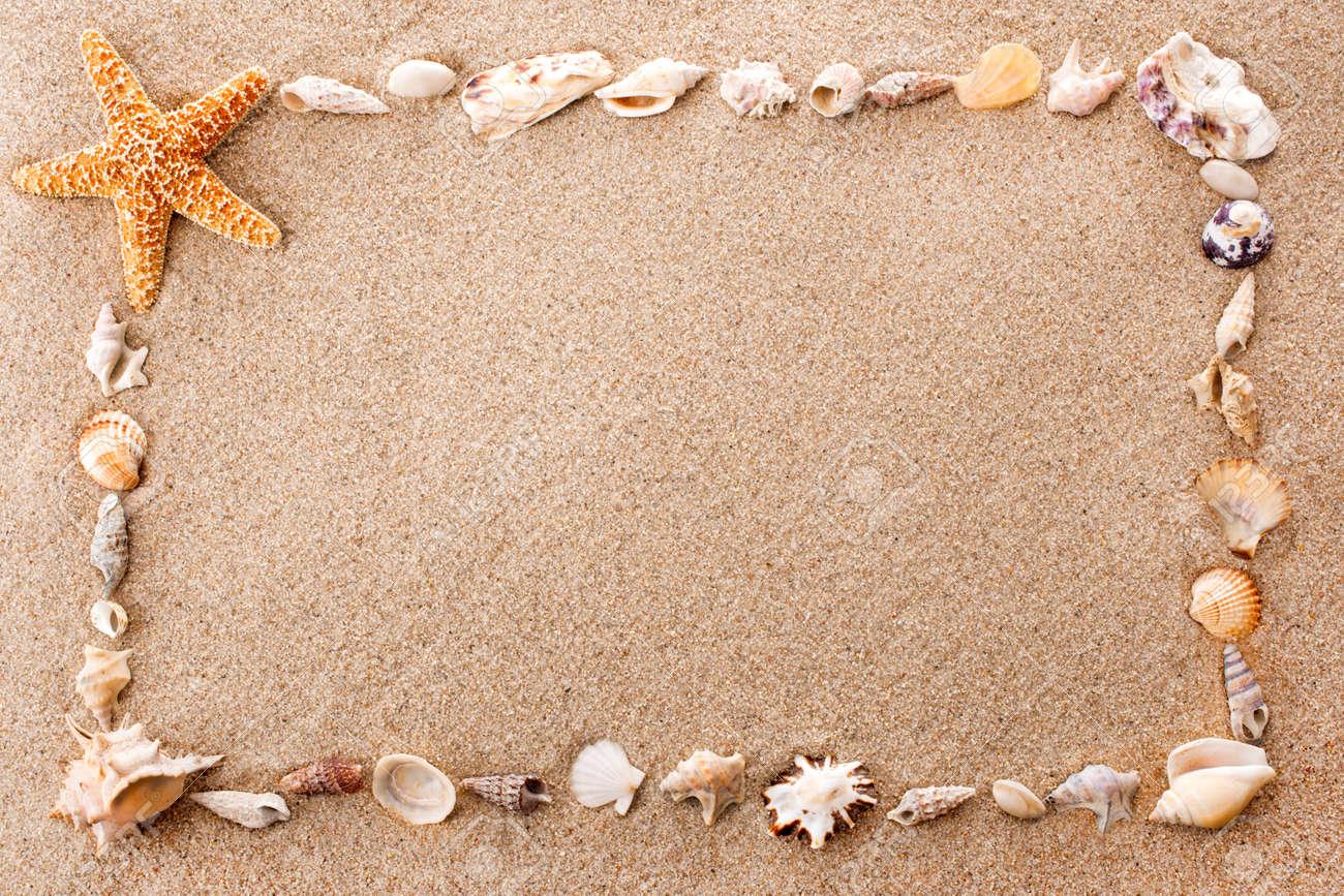 full frame of seashells on sandy beach stock photo 15473442