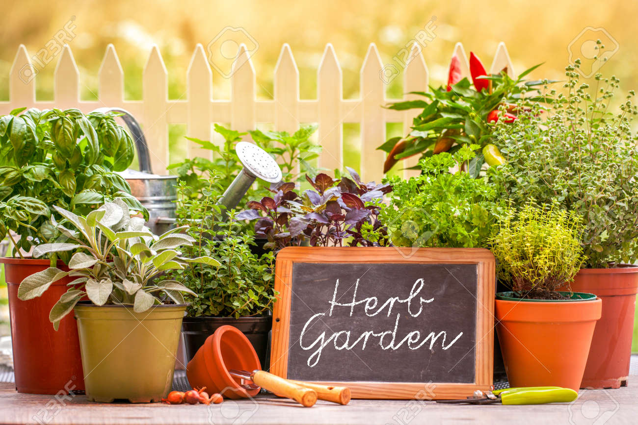 Herb Garden Images & Stock Pictures. Royalty Free Herb Garden ...