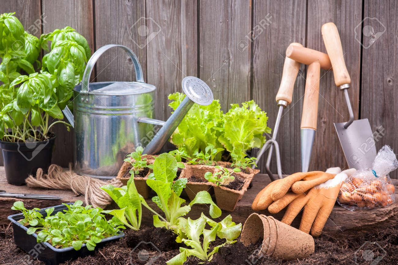 Les Semis De Laitue Avec Des Outils De Jardinage à L\'extérieur Du ...